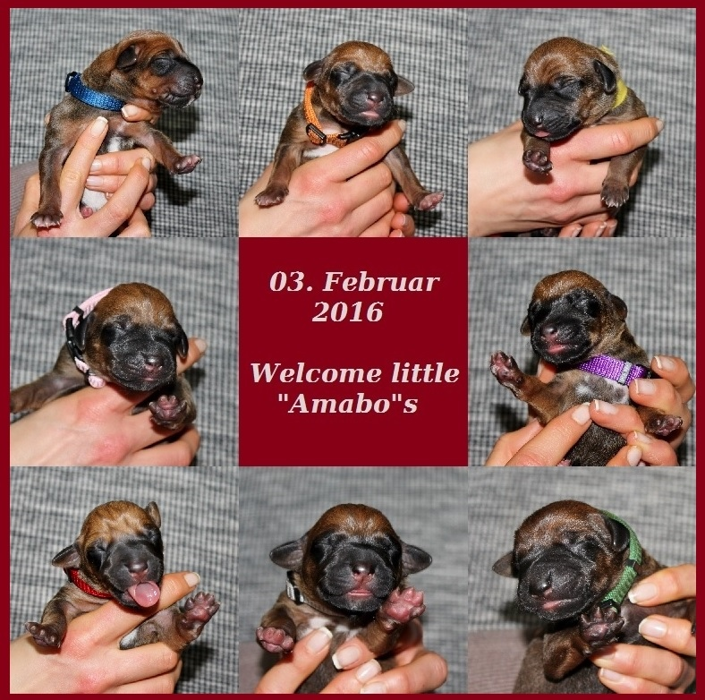 Welcome little Amabos (1)